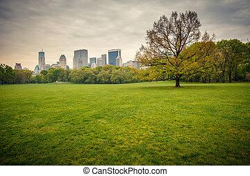central, lluvioso, parque, día