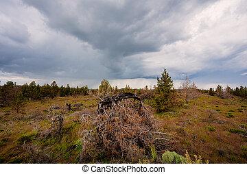 Central Oregon Rain Storm and Desert