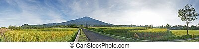 central,  panorama,  indonesia,  slamet,  mt,  java