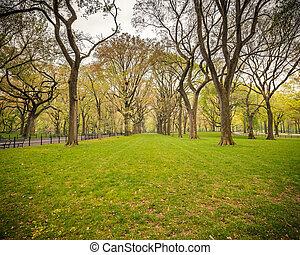 Central park at rainy day