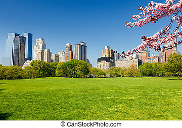 Central park at spring, New York - Central park at spring...
