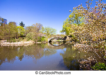 Central Park in NYC in spring bloom
