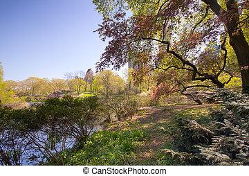 Central Park in NYC in spring bloom