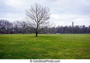 Central Park NYC lawn
