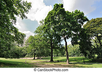 Central Park Recreation - Trees and park goers in central...