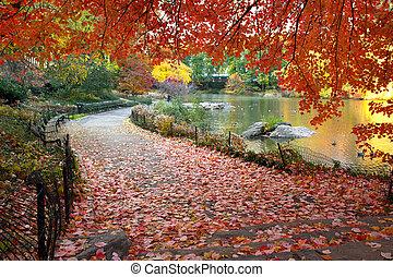 centrale, foglie, parco, york, cadere, nuovo