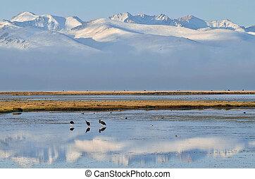"centrale, mattina, kyrgyzstan, presto, son-kul, uccelli, tien, shan, (""last, lake""), asia, montagne"