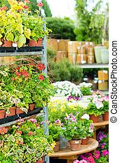 centro de jardín, casa, verde, flores potted