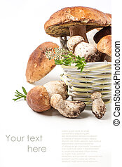 cep mushrooms with sample text