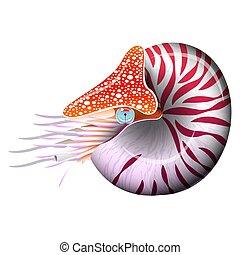 cephalopod, marine., illustration., pompilius., 軟体動物, ...