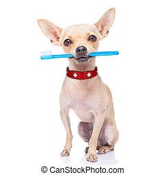 cepillo de dientes, perro
