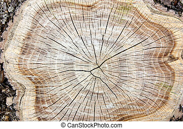 ceppo, albero