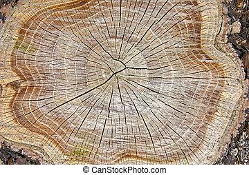 ceppo albero