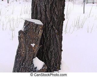 ceppo albero, neve