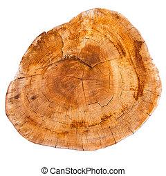 ceppo, cima, albero, isolato, fondo, bianco, vista