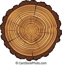ceppo, sezione, albero, croce, isolato, bianco