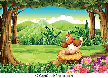 ceppo, sopra, uova, foresta, ombreggiatura, gallina