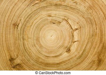 ceppo, taglio, struttura, woodgrain