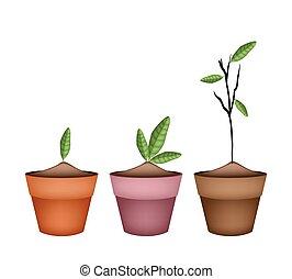 ceramica, pianta, bello, otri, ornamentale, fiore