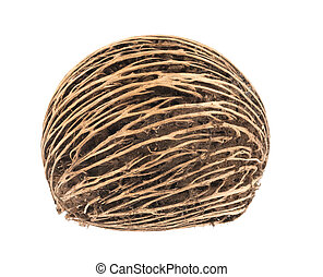Cerbera oddloam's seed, Pong pong seed or Othalanga - Suicide tree seed on white background
