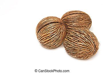 Cerbera oddloam's seed