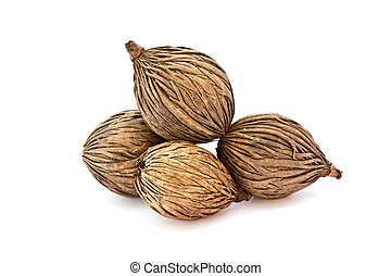 cerbera odollam's seed, Pong pong seed in white background