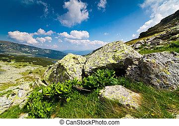 cerca, setea, yegua, pico, en, parang, montañas, rumania