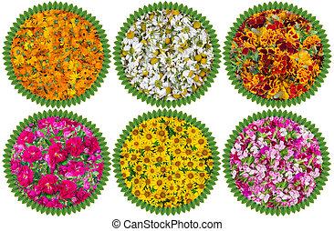 cercles, monde médical, fleurs, santé