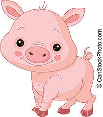 cerdo, diversión, zoo.