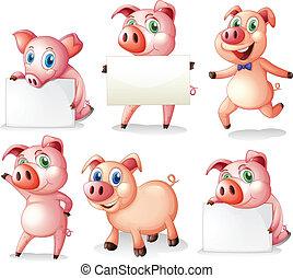 cerdos, vacío, signboards