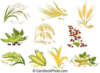 cereais, ícones, isolado, vetorial, grão, orelhas