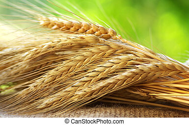 cereal., αιχμηρή ράβδος