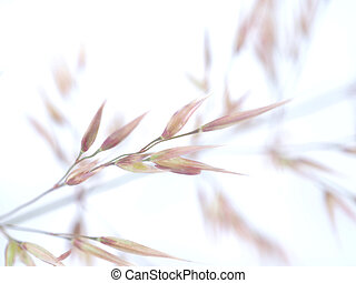 cereal, blanco, planta, plano de fondo