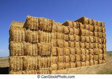 cereal, celeiro, com, forma quadrada, pilha, ligado, colunas
