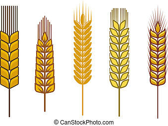 Cereal design elements - Cereal seeds and symbols isolated ...