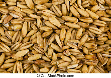Cereal grains oats - Oat grains. A product of agriculture....