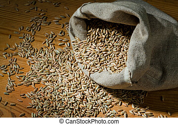 Cereal grains of rye - Grains of rye. Yields for crops in...