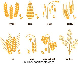 Cereal grains vector icons. rice, wheat, corn, oats, rye, barley
