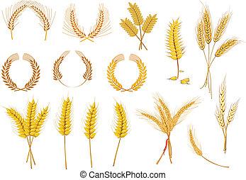 cereal, orejas, y, granos, conjunto