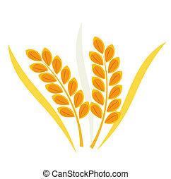 cereal, trigo, orelha
