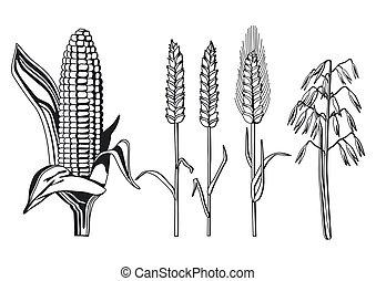 cereal varieties