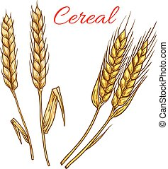 Cereal wheat and rye ears isolated vector icon
