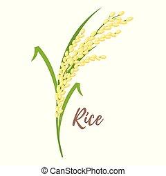 cereali, riso, -, illustrazione