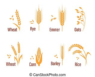 Cereals icon set. - Cereals icon set with rice, wheat, corn,...