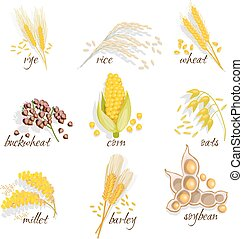 Cereals Icon Set - Cereals icon set with rye rice wheat corn...