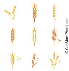 Concept for organic products label, harvest and farming, grain, bakery, healthy food. Agricultural symbols isolated on white background. Harvest. Organic food. Farmers product.