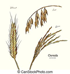 Cereals set. Hand drawn illustration wheat, oats, rice. -...