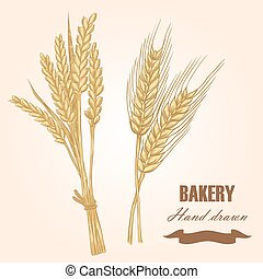 Cereals set. Hand drawn wheat and barley. Vector...
