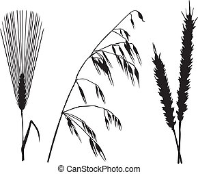 Cereals set - Silhouette image spikelet of cereals