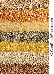 Cereals - wheat, barley, millet, rye, rice,maize and oats